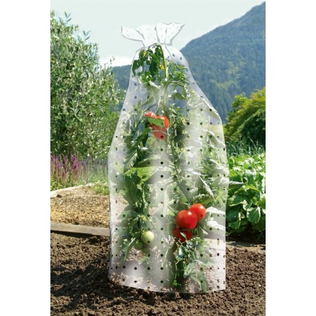 cappa protettiva per pomodori