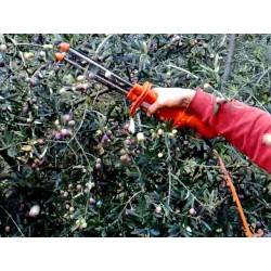 agevolatore raccolta olive GULLIVER